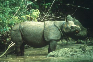 Jarvan Rhino in Crisis