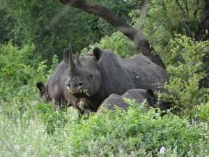 Black Rhino Malilangwe